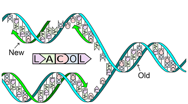 LACOL DNA 2 wordpress